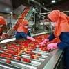 فروش کارخانه رب گوجه فرنگی